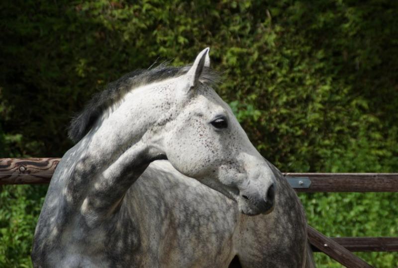 Photos de poney en bois bdsm