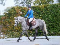 poney 8 ans a vendre